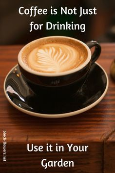 Coffee is Not Just for Drinking Use it in Your Garden