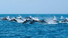 Ciao Delfini, ci vediamo in mare - (catamarano taras escursioni taranto)