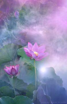Free Image on Pixabay - Landscape, Nature, Flower, Lotus Beautiful Nature Pictures, Beautiful Drawings, Lotus Flower Pictures, Lotus Flowers, Pink Flowers, Krishna, Chakra, Classroom Art Projects, Landscape Wallpaper