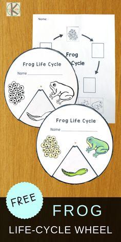 FREE Frog Life-Cycle-Wheel to help kids learn about life cycles plus 21 Life Cyc. FREE Frog Life-C Frog Activities, Kindergarten Activities, Sequencing Activities, Frogs For Kids, Cycle For Kids, Frogs Preschool, Life Cycle Craft, Lifecycle Of A Frog, Animales
