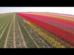 BOXES FOR KATJE/ROXABOXEN: ART | VISUAL COMMUNICATION | Stunning Aerial Video of Dutch Tulip Fields - Tulips Fields in Holland - YouTube