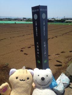 クマ散歩:三浦・岩礁のみちに品行方正なクマ出没 (松輪 Matsuwa) The Bear took a walk along Miura Reef!♪☆(^O^)/  #品行方正 #Bear #三浦