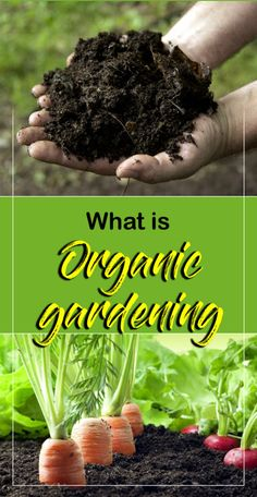 Organic gardening |How to make Organic compost | Organic farming -