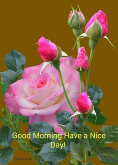 Good Morning Flowers Pictures, Good Morning Beautiful Flowers, Good Morning Roses, Beautiful Rose Flowers, Amazing Flowers, Sunday Pictures, Flower Images, Flower Pictures, Happy Good Morning Images