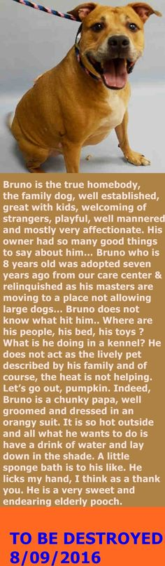 MURDERED 8/9/16 Manhattan Center My name is BRUNO. My Animal ID # is A0864844. I am a neutered male tan pit bull mix. The shelter thinks I am about 8 YEARS old. I came in the shelter as a OWNER SUR on 08/05/2016 from NY 10461, owner surrender reason stated was MOVE2PRIVA. http://nycdogs.urgentpodr.org/bruno-a0864844/
