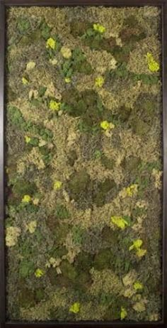 Moss Field - real moss to hang on your wall. Natural Curiosities brings the outdoors in!
