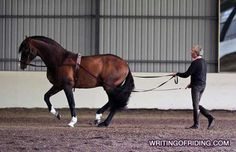 Equestrian Blog | Riding, Training, Popular Topics & Trends, Classical Dressage, Horse Welfare, Rollkur and more.