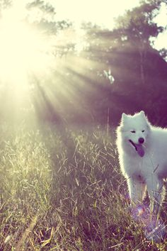 Samoyed Yuki. I had a Samoyed when I was younger. His name was snow. Miss him!!!