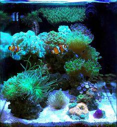 Saltwater Aquarium Setup, Coral Reef Aquarium, Saltwater Fish Tanks, Tropical Fish Aquarium, Nano Aquarium, Marine Aquarium, Marine Fish Tanks, Marine Tank, Nano Reef Tank