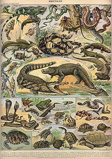 Reptiles, from Nouveau Larousse Illustré, 1897-1904. Notice the inclusion of amphibians (below the crocodiles).