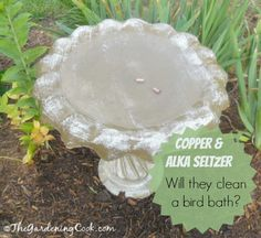 Testing Alka Seltzer and Copper to clean a bird bath and keep it clean. Do they work?  find out at thegardeningcook.com/alka-seltzer-copper-birdbath