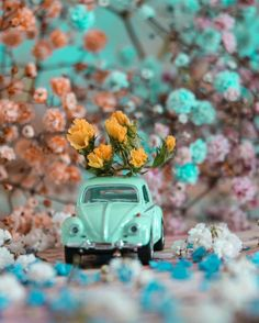 Miniature Photography, Cover Photo Quotes, Music Wallpaper, Adventure Photography, Love Rose, Little Things, Vintage Art, Photo Art, Flowers