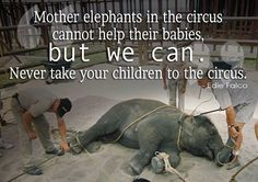 Mother Elephants in the circus cannot help their babies, but WE CAN. Never take your children to the circus. https://www.facebook.com/photo.php?fbid=10151948994332280&set=a.10150675080727280.412947.690987279&type=1&theater
