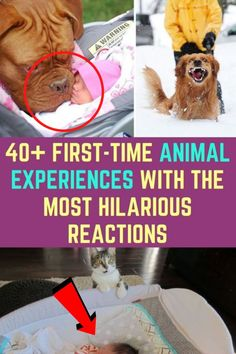 Some of the most memorable moments in our lives come from the first time we experience something, whether it was flying in a plane or seeing snow for the first time. However, those moments aren't only important for humans, they are also special for animals.