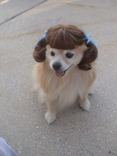 50 Hilarious Dogs InWigs