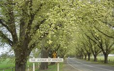 Bacchus Marsh, Avenue of Honour, a heritage-listed memorial avenue from each tree with a personalised plaque. Melbourne Victoria, Emergency Response, Remembrance Day, Country Roads, Australia, Bacchus, Inspiration, Biblical Inspiration, Anniversaries