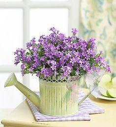 purple flowers in watering can Easter Flowers, Mothers Day Flowers, Purple Flowers, Beautiful Flowers, Fresh Flowers Online, Bloom, Container Flowers, Garden Gifts, Flower Delivery