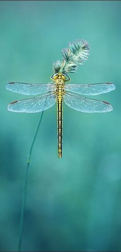 Dragon Fly beauty. £                                                                                                                                                                                 More