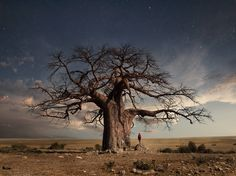 nature Recipes food and drinks names Weird Trees, Baobab Tree, African Art Paintings, Giant Tree, Lone Tree, Tree Silhouette, Exotic Plants, Fantastic Art, Tree Art
