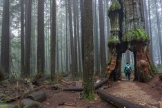 Forget the classic hikes you've seen on social media and check out one of these off the beaten path and unusual hikes near Vancouver. Visit abandoned places, take in a bit of history, see some wildlife, visit enormous trees and more. Vancouver Travel, Vancouver Island, North Vancouver, Camping In North Carolina, Honeymoon Photography, Cedar Trees, Canada Travel, Abandoned Places, Hiking Trails
