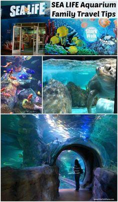 SEA LIFE Grapevine Aquarium Review in Grapevine, Texas