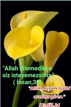 Allah Islam, Meaningful Words, Good Morning Quotes, Beautiful Roses, Quran, Inspirational Quotes, Positivity, Life, Flowers