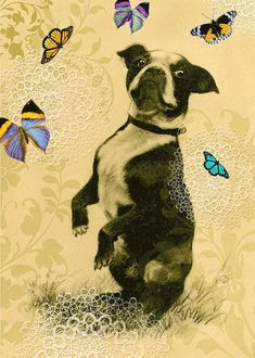 Boston Terrier all occasion card with butterflies Mini Pigs, Antique Illustration, Happy Dogs, Art Blog, Animal Drawings, Pet Portraits, Butterflies, Puppies, Charcoal Drawing