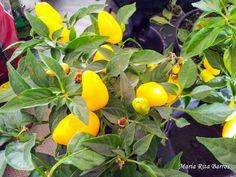 UPIS_FOTO_042016_ATIVIDADE 03_FRUTOS