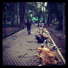 School for dogs at La Condesa, Mexico City. Cultural Capital, Capital City, Dog School, Mexico City, Outline, Wanderlust, Angel, Joy, America