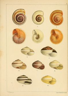 n478_w1150 by BioDivLibrary, via Flickr