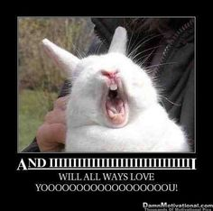 There are no words for how much this bunny singing a Whitney Houston song made my day.  LOLOLOLOL!!