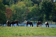 Saratoga Horse Play