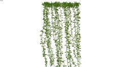 cúc tần ấn độ - Vernonia elliptica - 3D Warehouse