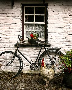 "Inspiration 1: Irish cottage white-washed stone wall.  Inspiration 2:  pair of antique bikes like this with ""Just Married"" & cans hanging off back of seat."