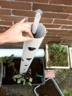 Plantação vertical de morangos em tubo de pvc                                                                                                                                                     Mais
