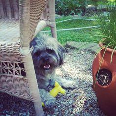 Teddy #summer #outdoors #cute #dog... | Wicker Blog   wickerparadise.com