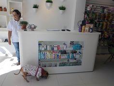 Cliente em potencial: cadela foge da dona e entra na loja para dar uma 'espiada'