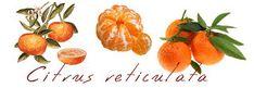 Μέσα στα φρούτα του χειμώνα κυριαρχεί και ένας μικρός θησαυρός:  το μανταρίνι  το μανταρίνι είναι ένα μικρό θαύμα-σε επόμενη ανάρτηση όλα... Simple Minds, Cantaloupe, Health Fitness, Hair Beauty, Herbs, Stuffed Peppers, Fruit, Vegetables, Blog