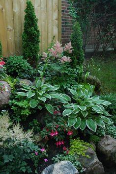 Shade garden plants, astilbes, hostas, fuchsias, creeping jenny