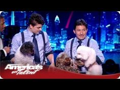 The 2012 America's Got Talent winners, the Olate Dogs, will keep you at the edge of your seat as these K-9s jump on their hind legs, drive miniature cars and form conga lines during this year's Big E Circus Spectacular!