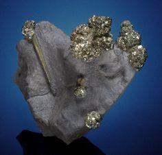 Minerals:Cabinet Specimens, PYRITE with BACULITES YOKOHAMI . Brass Balls Claim, StateBridge, Eagle County, Colorado. ...