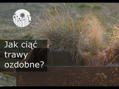 Jak przycinać trawy ozdobne? Jak ciąć miskanta, rozplenicę, kostrzewę siną, turzyce po zimie? - YouTube Garden, Youtube, Instagram, Balconies, Garten, Gardens, Tuin, Yard