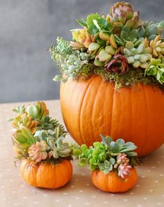 34 Pumpkin Decorations For Fall - Pumpkin Succulent Harvest Decoration - Easy DIY Pumpkin Decor Ideas for Home, Yard, Outdoors - Cool Pumpkin Decorating Ideas for Adults and Kids Party, Creative Crafts With Paint, Glitter and No Carve Projects for Hallowe Thanksgiving Decorations, Halloween Decorations, Thanksgiving Ideas, Outdoor Thanksgiving, Hosting Thanksgiving, Thanksgiving Tablescapes, Pumpkin Centerpieces, Centerpiece Ideas, Pumpkin Table Decorations
