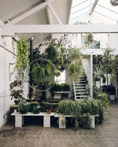 How many house plants did you have the last time you counted? Just looking back through our pictures from @claptontram and comparing to our current plant collection. We have a long way to go before we hit these levels