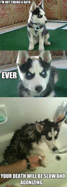 Bath story - husky does not like taking a bath