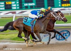 (Post Position 16) Intense Holiday, trained by Todd Pletcher with John Velazquez aboard for owner Starlight Racing.  Intense Holiday finished 5th in the Gr. 1 Champagne Stakes, 4th in the Gr. 2 Nashua Stakes, 4th in the Remsen Stakes (Gr. 2), 3rd in the Gr. 2 Holy Bull Stakes, 1st in the Gr. 2 Risen Star Stakes, and 2nd in the Gr. 2 Louisiana Derby.  Intense Holiday has career earnings of $551,900. . #2014KYDderby #horseracing #sports #athletes #horses
