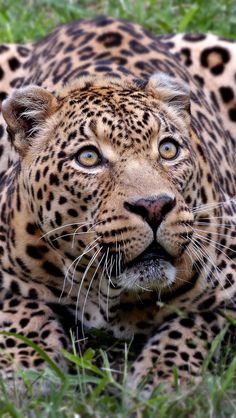 I am a big fan of animal world and I love to see more about them