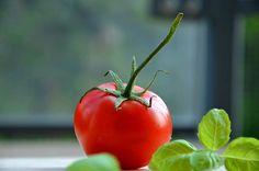 Doing some organic gardening is ideal and these tomatoes gardening tips are some of the best you will come across. Growing tomatoes in pots is ideal if you are suffering from limited garden space. Tomato Vegetable, Tomato Garden, Tomato Plants, Home Remedies For Acne, Acne Remedies, Gardening For Beginners, Gardening Tips, Fresco, Health Benefits Of Tomatoes