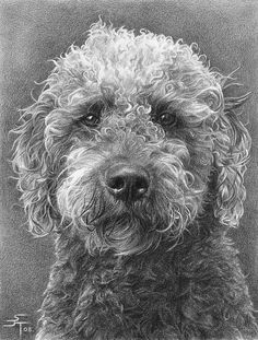 Realistic Animal Drawings Cat Pencil Drawing Images Of In Realistic Drawings, Art Drawings, Drawing Faces, Pencil Drawings Of Animals, Draw Animals, Dog Paintings, Art Graphique, Beautiful Drawings, Dog Portraits