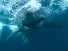 145 naciones comercian con productos de tiburones